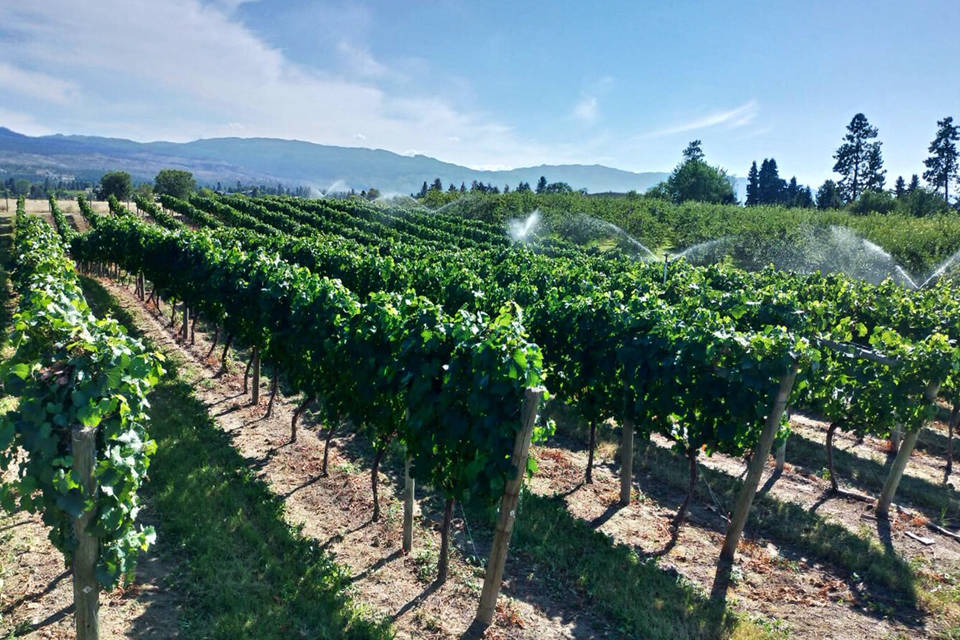 Okanagan Vineyard Winery